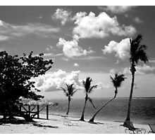 The Crooked Palm Photographic Print