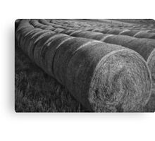 Lined up....... Metal Print