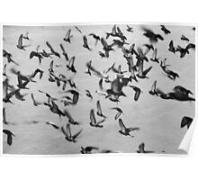 A Flock of Seagulls Poster