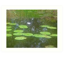 Beauty of the lily pond (Poem attached) Art Print