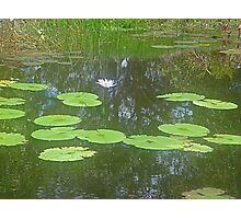 Beauty of the lily pond (Poem attached) Photographic Print