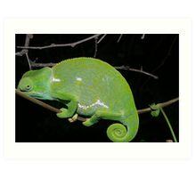 Flap neck Chameleon 2 Art Print