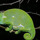 Flap neck Chameleon 2 by Riaan van der Merwe