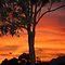 Evening Sky - 15 of February