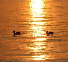 Duck a'la Range (Rhode Island) by BGpix