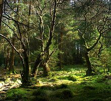 Forest Glade by VoluntaryRanger