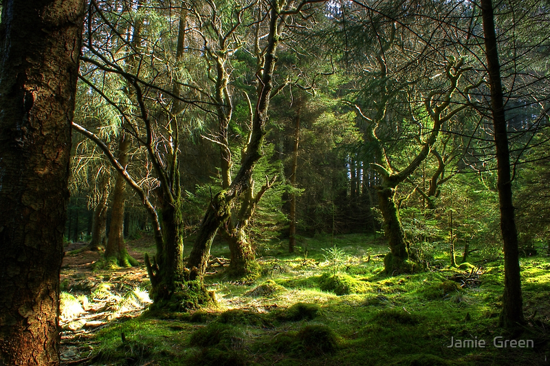 Forest Glade by Jamie  Green