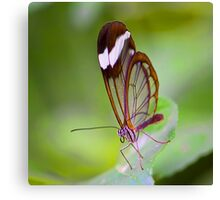 See Through Butterfly Canvas Print