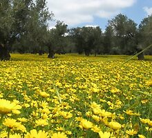 Yellow Bloom  by Avner