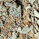 coral by alyssa naccarella