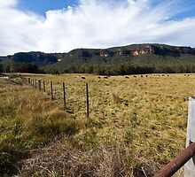 Megalong Valley, Blue Mountains, Australia  by Michelle Lia