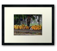 huge papayas Framed Print