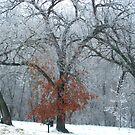 Something Forgot That it is Winter by Linda Miller Gesualdo