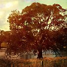 End of the drought ... by Chris Armytage™