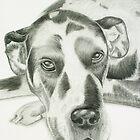 Harlequin Great Dane by Susanne Correa