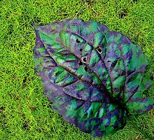 Leaf on mossy ground by Susana Weber