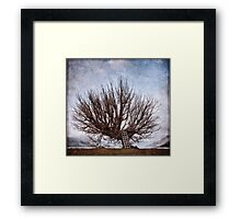 The Whomping Willow Tree Framed Print