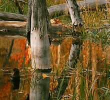 Fall high water in Beaver pond by Cushman