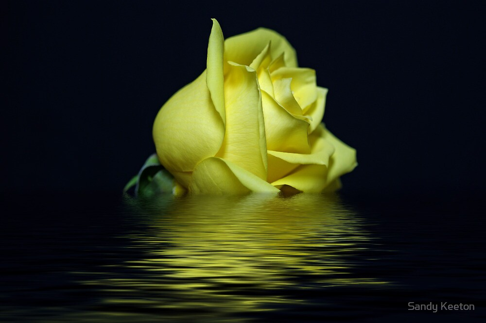 Yellow Rose II by Sandy Keeton