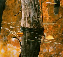 Floating yellow leaf in Beaver pond. by Cushman