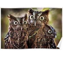 Little Lucy the Screech Owl Poster