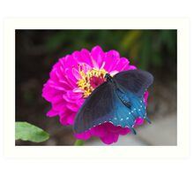 Blue Swallowtail Art Print
