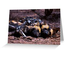 WILD DOG -Lycaon pictus (ENDANGERED SPECIES) Greeting Card