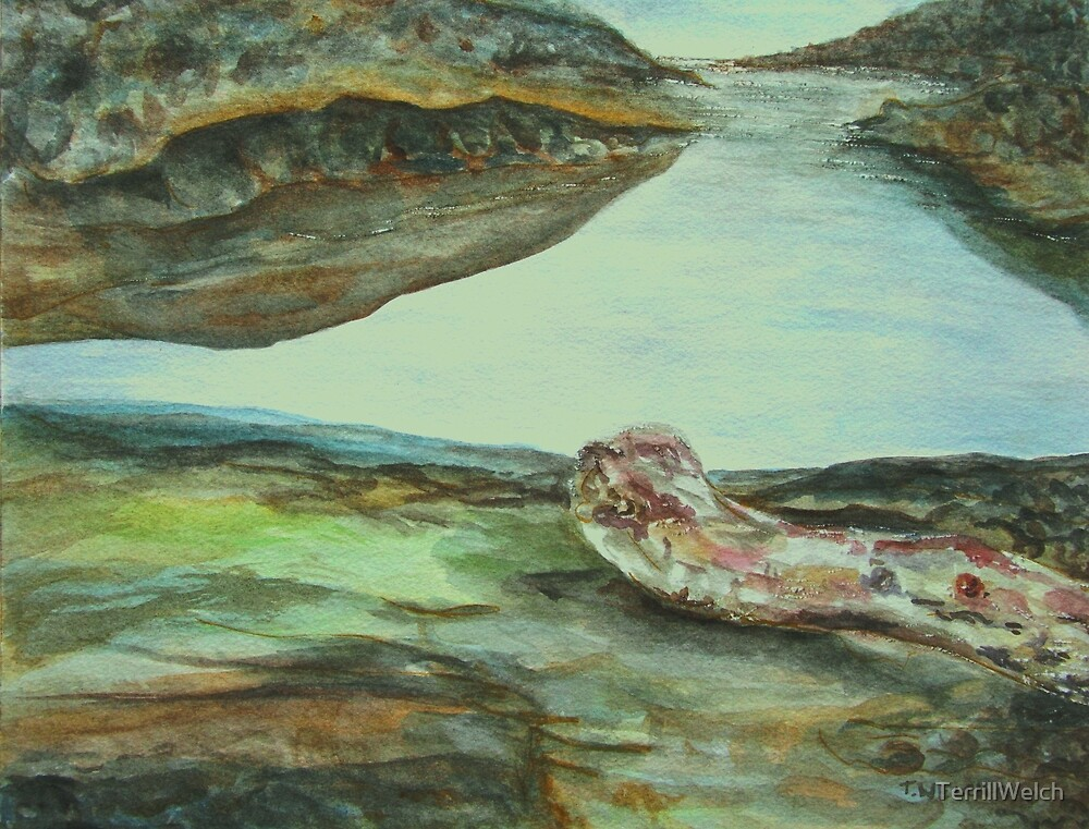 arbutus driftwood and sandstone by TerrillWelch