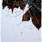 Misty Dew on Cobweb 2 by Alikat72