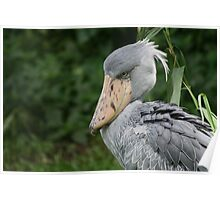 Shoebill in Singapore Poster