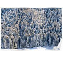 White Forest Poster