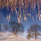 River Lune Reflection. Cumbria, England. by David Dutton