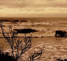I see the sea by shrdn