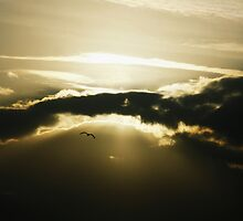 simply flying to the bridge of the dreams by shrdn