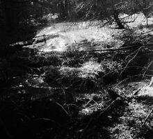 morning in woods by wiazemsky