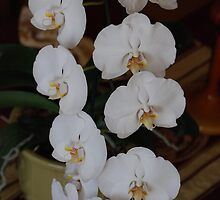 White Orchid 2 Center Piece by zwrr16