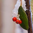 Frozen berries by evilcat