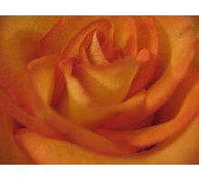 Juicy Fruit Rose Photographic Print
