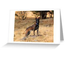 What are you loking at? Greeting Card
