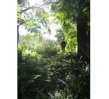 Green Glade Photographic Print