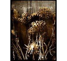 Artichokes Photographic Print