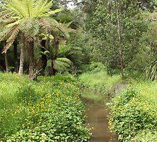 Monbulk Creek by Emma Holmes