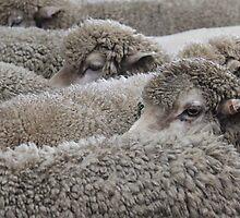 Sheep by Emma Holmes