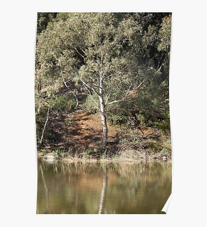 Tree Reflections Poster