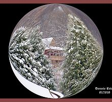 Snowglobe by Donnie