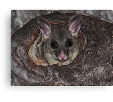 Possum Baby Canvas Print