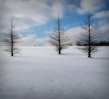 Starkness of Winter by G. David Chafin