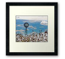 Cotton Pickin' - Toowoomba Qld Australia Framed Print