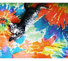 Kaleidoscope Kitten Photographic Print