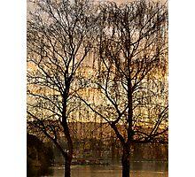 Two Trees, Lake Merritt Photographic Print